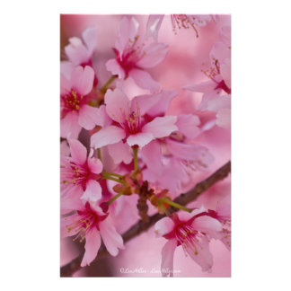 Bathed in Pink Japanese Cherry Blossoms Stationery