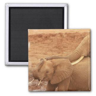 Bathing Baby Elephant Magnet Fridge Magnets