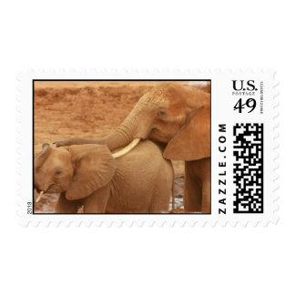 Bathing Baby Elephant  Stamp