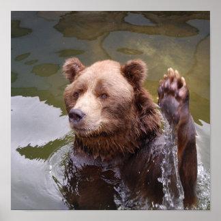 Bathing Brown Bear Poster