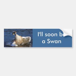 Bathing Cygnet Bumper Sticker