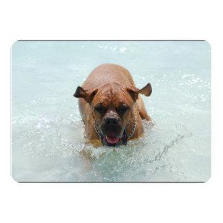 """Bathing French Mastiff 5"""" X 7"""" Invitation Card"""
