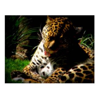 Bathing Leopard Postcards