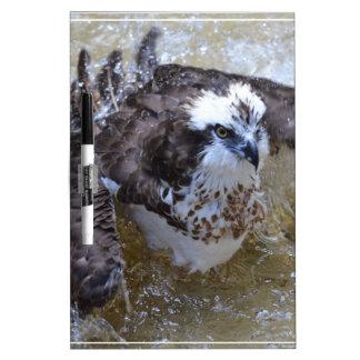 Bathing Osprey Dry-Erase Whiteboard