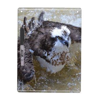 Bathing Osprey Dry-Erase Board
