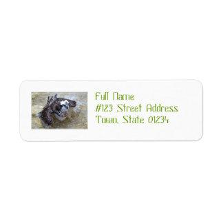 Bathing Osprey Return Address Label