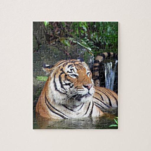 Bathing Sumatra tiger Puzzle