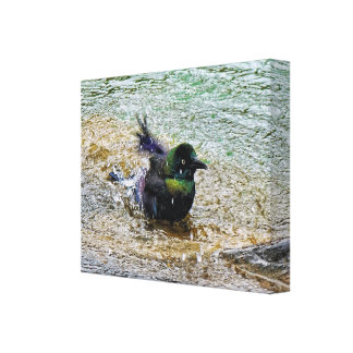 Bathing Time for the Starling #1 Canvas Print
