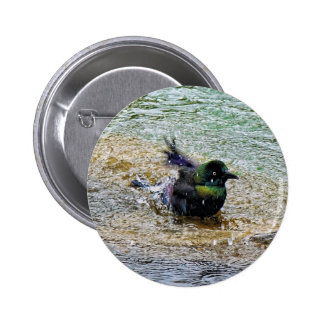 Bathing Time for the Starling 2 Inch Round Button
