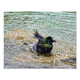 Bathing Time for the Starling Photo Print