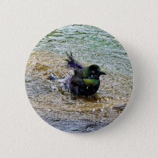 Bathing Time for the Starling Pinback Button