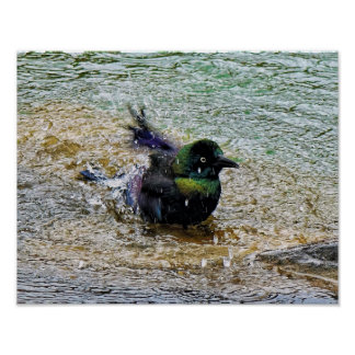 Bathing Time for the Starling Poster
