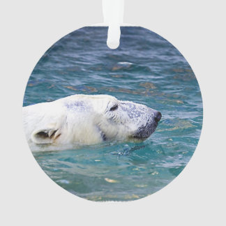 Batimiento del oso polar