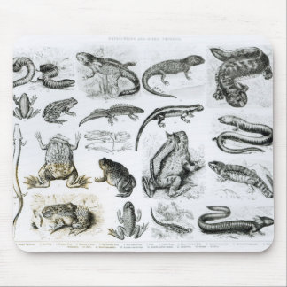 Batrachians and other Amphibia Mouse Pad