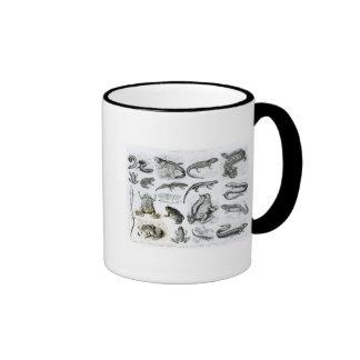 Batrachians and other Amphibia Ringer Coffee Mug