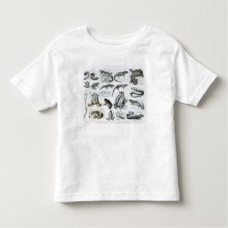Batrachians and other Amphibia Tshirts
