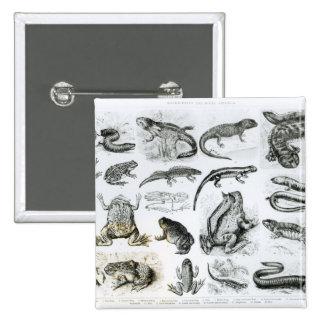 Batracios y otras anfibias pin cuadrada 5 cm