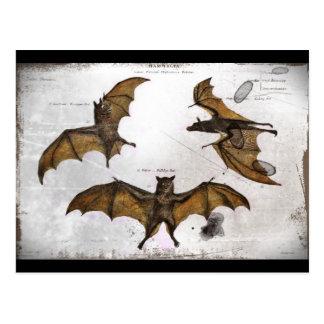 Bats an Educational Plate Postcard