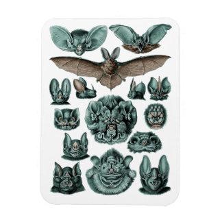 Bats by Ernst Haeckel Magnet