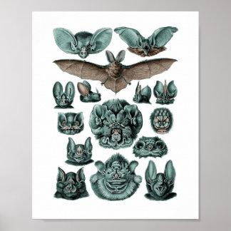 Bats - Chiroptera Poster