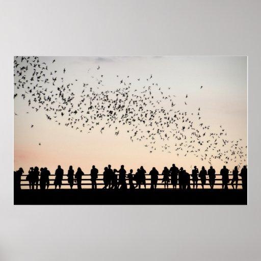 Bats of Austin - Austin, Texas Posters