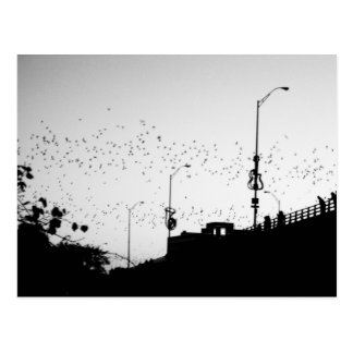 Bats over Austin Postcard