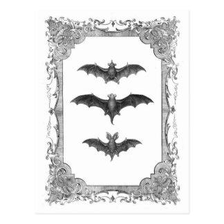 Bats Vintage Frame Halloween Postcard