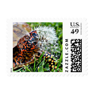 Battle Of The Turtle & The Pussy Willow Postage Stamp