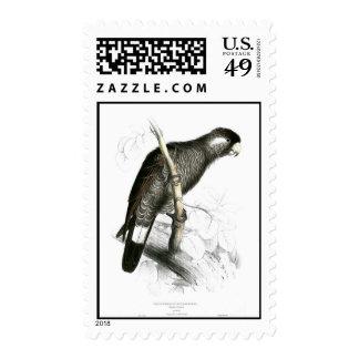 Baudin's cockatoo postage