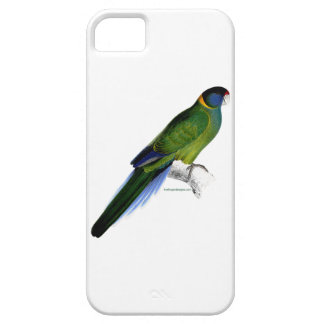 Bauer's Parakeet image by Edward Lear iPhone case
