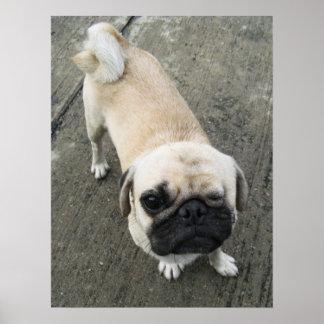 Bauwk ... Pug Dog ... かわいい 子犬 Poster