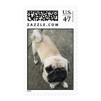 Bauwk ... Pug Dog ... Thailand Stamp