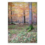 Bavaian Woods Greeting Cards
