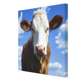 Bavarian cow against blue sky canvas print