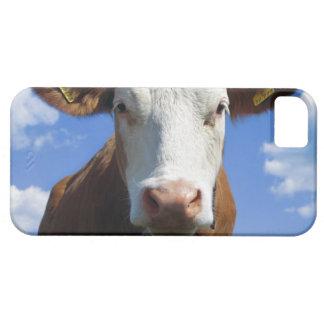 Bavarian cow against blue sky iPhone 5 cases