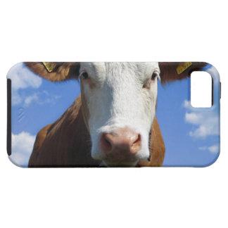 Bavarian cow against blue sky iPhone SE/5/5s case