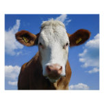 Bavarian cow against blue sky print