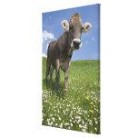 bavarian cow canvas print