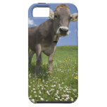 bavarian cow iPhone SE/5/5s case