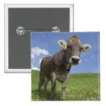 bavarian cow pinback button