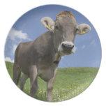 bavarian cow plate