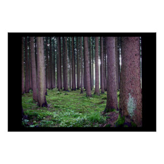 Bavarian Forest Poster