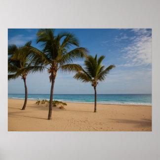 Bavaro Beach, Dominican Republic Coconut Trees Poster
