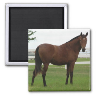 BAY ANDALUSIAN FILLY 2 INCH SQUARE MAGNET