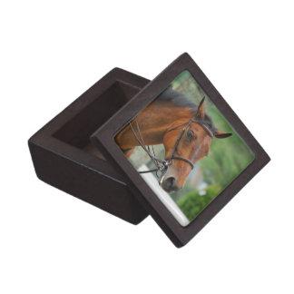 Bay Arab Horse Gift Box Premium Keepsake Box
