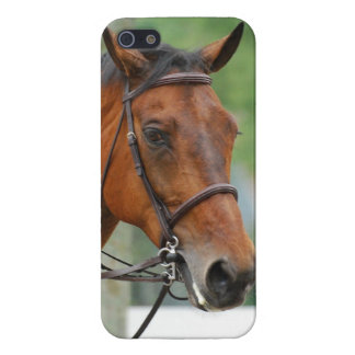 Bay Arab Horse Covers For iPhone 5