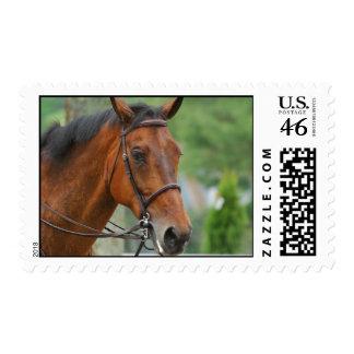 Bay Arab Horse Postage Stamp