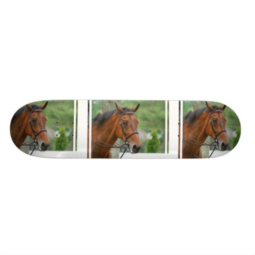 Bay Arab Horse Skateboard
