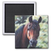 Bay Arabian horse face Magnet