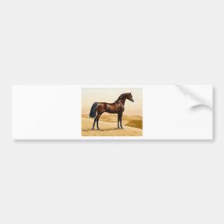Bay Arabian Stallion Bumper Sticker